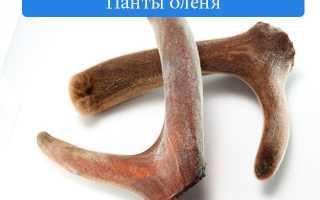 Панты оленя полезные свойства настойка на водке