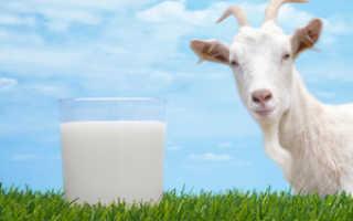 Полезно ли пожилым людям козье молоко