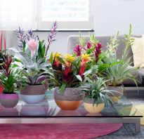 Полезные свойства домашних растений