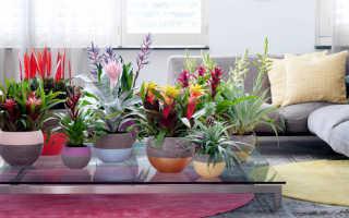 Полезные растения для квартиры