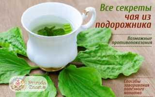Чай из подорожника полезные свойства