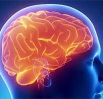 Продукты полезные для головного мозга