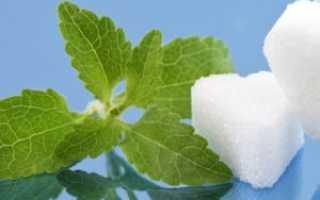 Растение стевия ее полезные свойства и лечебные