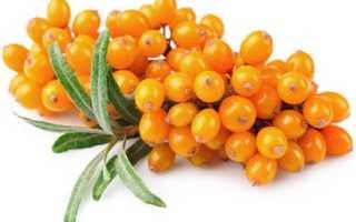 Полезные свойства ягоды облепихи