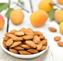 Полезны ли абрикосовые ядра