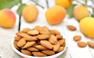Ядра абрикоса польза