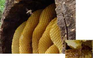 Мед дикий полезные свойства и противопоказания