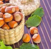 Фундук полезные свойства ореха