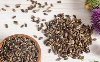 Семена расторопши чем полезны