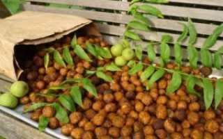 Чем полезен орех маньчжурский