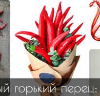 Чем полезен красный перец острый для женщин