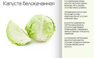 Чем полезна белокочанная капуста для организма человека
