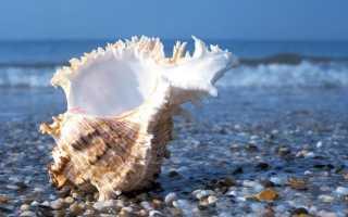 Чем полезен отдых на море