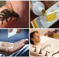 Чем полезен укус пчелы