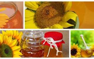 Чем полезен мед из подсолнечника