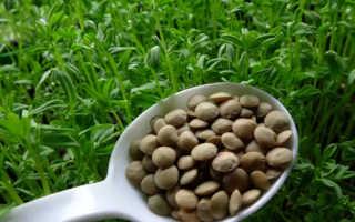 Проростки чечевицы полезные свойства