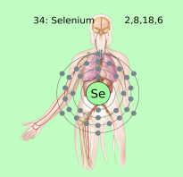 Чем полезен для организма человека селен
