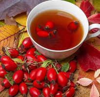 Чай из плодов шиповника польза и вред