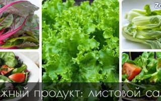 Чем полезны листья салата для организма человека