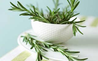 Полезные свойства розмарина для здоровья