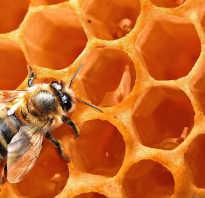 Польза медовой воды для организма