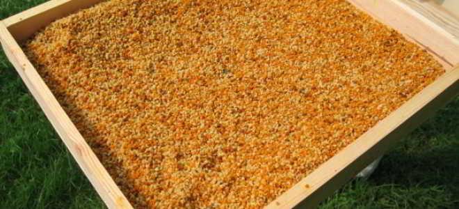 Цветочная пыльца полезные свойства обножка