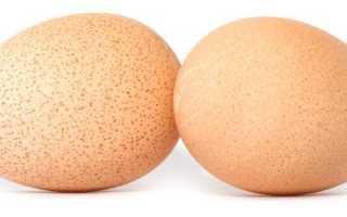 Яйца цесарки чем полезны