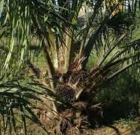 О вреде пальмового масла