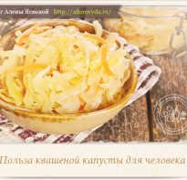Свойства квашеной капусты и чем она полезна