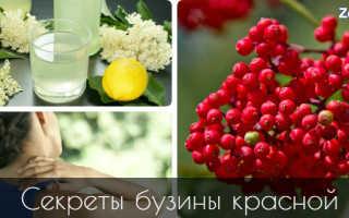Красная бузина фото полезные свойства