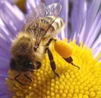Чем полезна цветочная пыльца для женщин