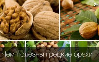 Чем полезны грецкие орехи для здоровья женщины