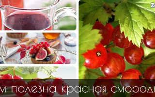 Морс из красной смородины полезные свойства