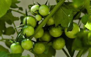 Чем полезны зеленые помидоры