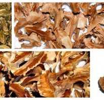 Полезные свойства перегородок грецкого ореха