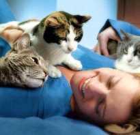 Чем полезны коты для человека