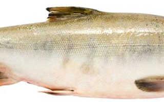 Чем полезна рыба кета