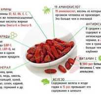 Плоды годжи польза и вред