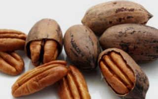 Орех пикантный полезные свойства