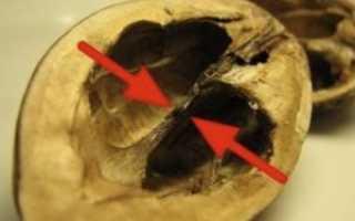 Чем полезны ореховые перегородки