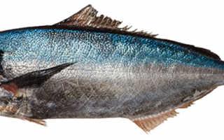 Рыба саворин полезные свойства