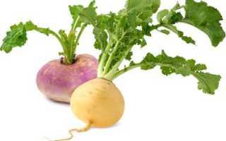 Репа овощ полезные свойства