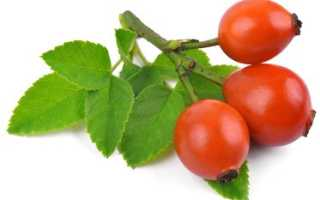 Шиповник плоды полезные свойства
