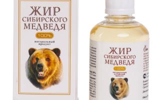 От чего полезен медвежий жир