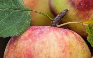 Что полезного содержится в яблоках