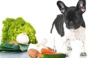 Полезные овощи для собак