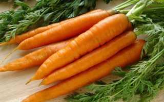 Полезные свойства моркови вареной
