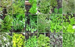 Полезные травы на огороде