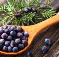Плоды можжевельника полезные свойства