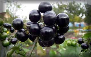 Самбери ягода полезные свойства фото